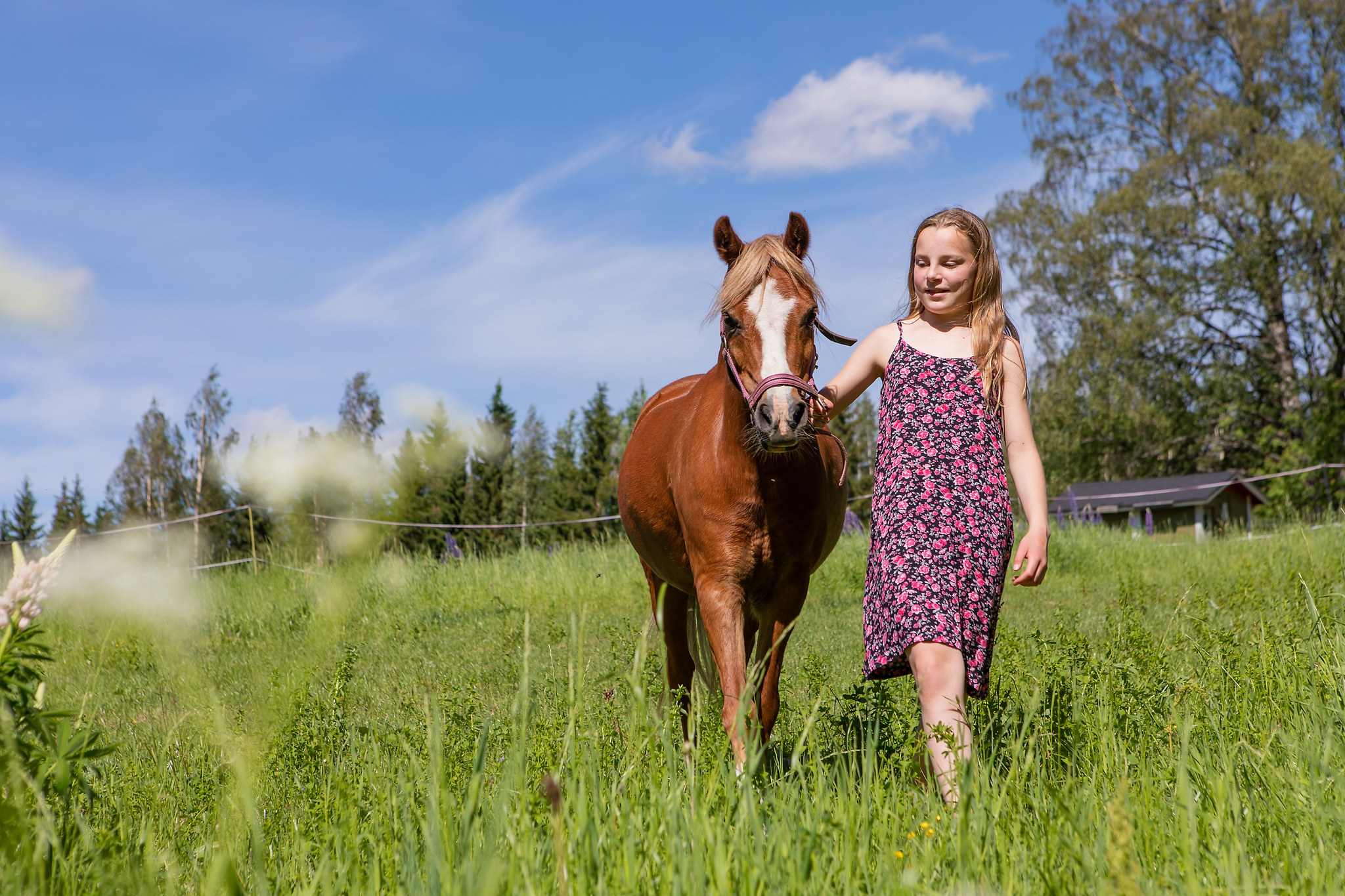 tyttö ja poni